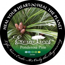 Ponderosa Pine EterniTrees Urn for Pets