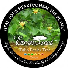 Tulip Poplar EterniTrees Urn