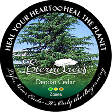 Deodar Cedar EterniTrees Urn for Pets